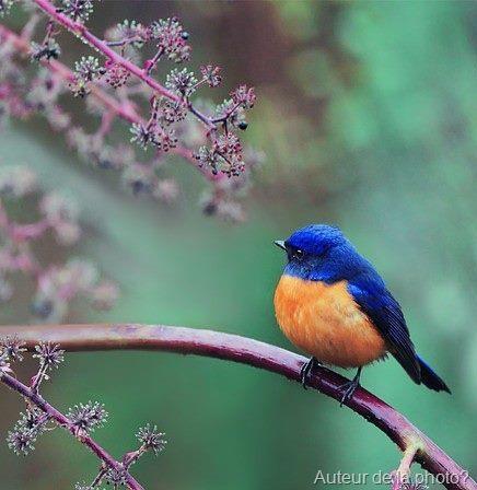 oiseau orange et bleu ici et maintenant